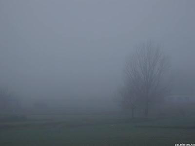 paisaje de espesa neblina