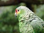 Las aves de nuestra naturaleza
