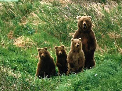familia de osos pardos en la hierba: mamá osa y tres oseznos pardos
