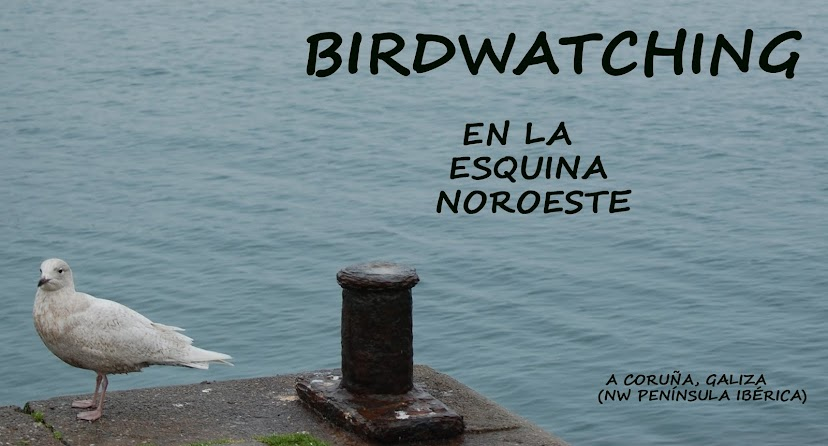 Birdwatching en la esquina noroeste
