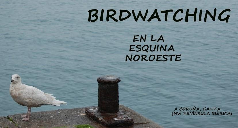 Birdwatching en la esquina noroeste