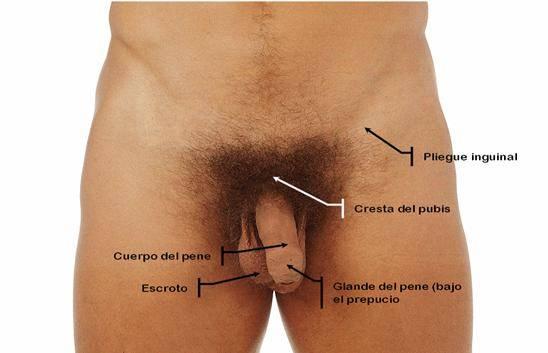 chicos haciendose pajas punto g masculino externo