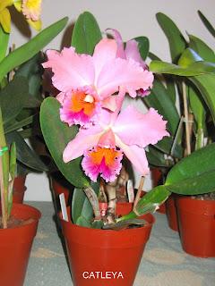 fertilizantes para orquideas nutrientes