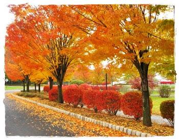 Outono mio..