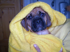 Now thats a snuggled puggle!