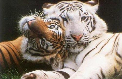 Las mejores fotos de animales salvajes Haciendofotos com - fotos de animales salvajes del mundo
