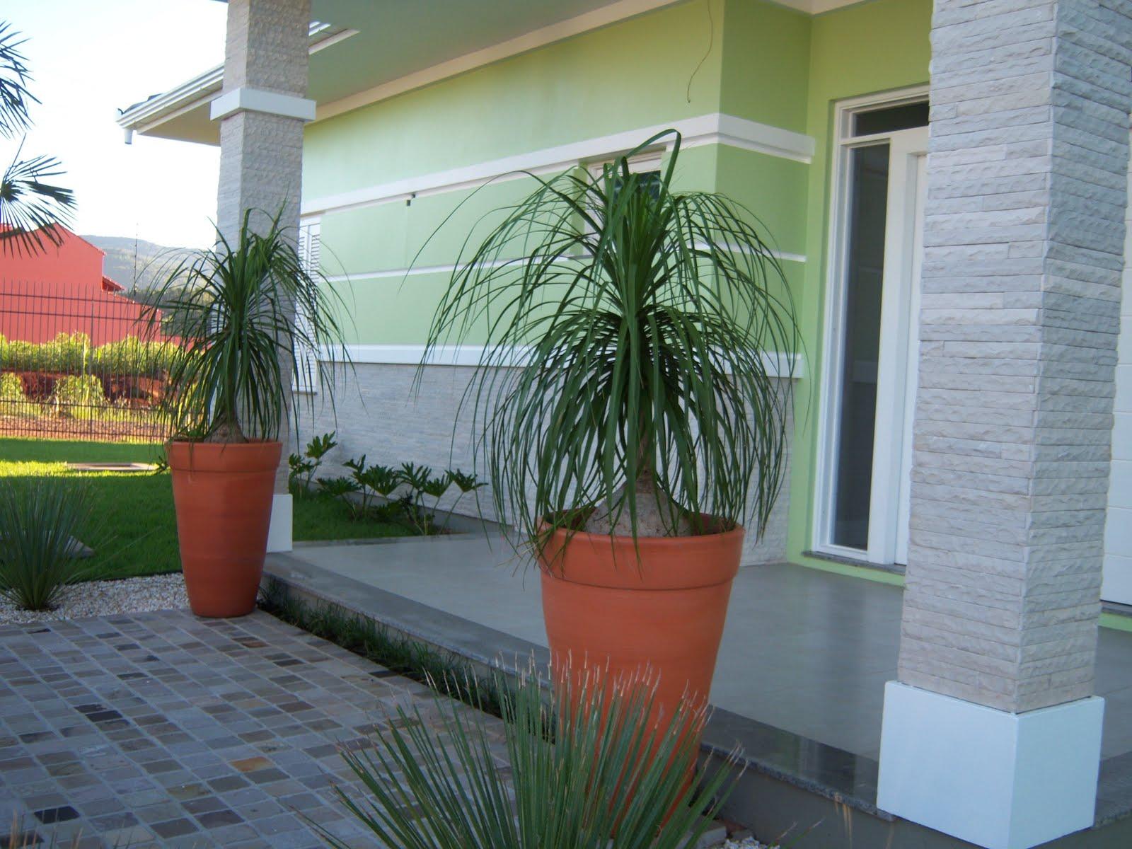 Feito por arquiteto dica feito por arquiteto vasos - Plantas grandes de interior resistentes ...