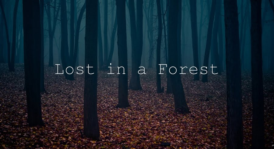 Lost in a Forest.