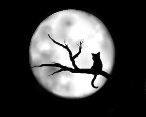 GATO NEGRO Gato_negro_by_Lulesh