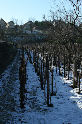 pilisvorosvar-daily-photo-vineyard