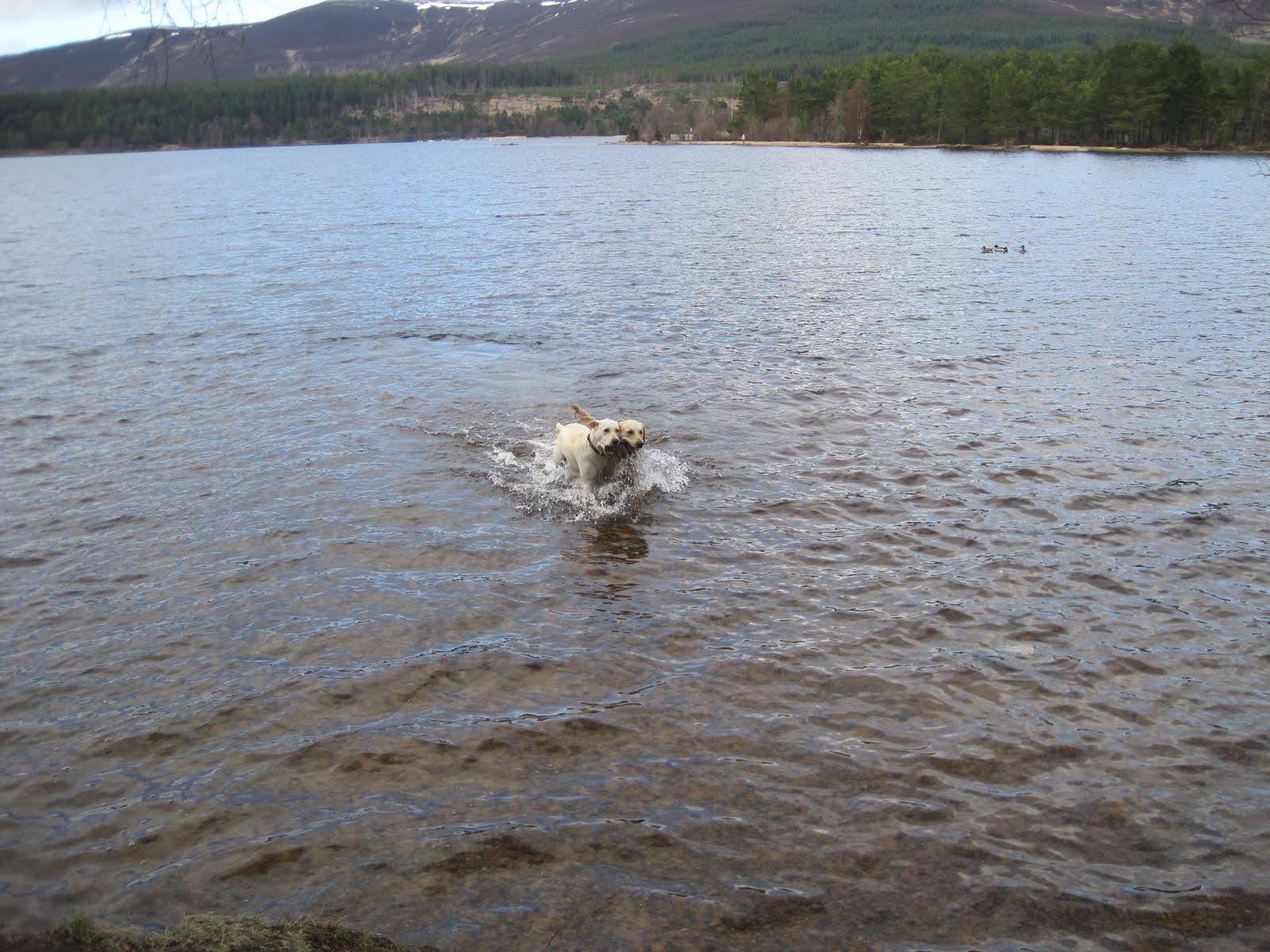 Dog Boarding Porthcawl