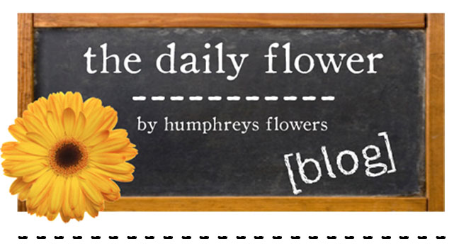 The Daily Flower