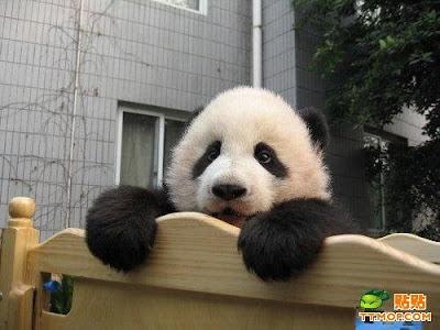 El rincon de la ratoncilla guarderia de pandas for Andy panda jardin de infantes