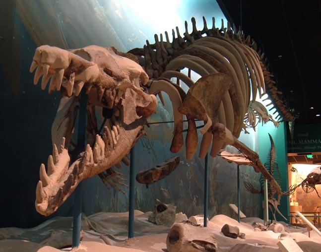 http://1.bp.blogspot.com/_xm8YFkJrBrI/THgdR1hbwRI/AAAAAAAABXI/ERuruutBk_k/s1600/Basilosaurus.jpg