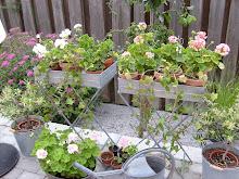Mina fina blomsterbord i zink