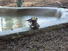 macho a galar femea no zoo de lisboa...