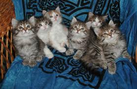 Buku Berlampu: jenis2 kucing yang tiut miut!!!!!