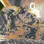 http://1.bp.blogspot.com/_xqD4t0IGeA4/STPwODvTfII/AAAAAAAAFaM/KuJfvHPAvTU/s1600/619_06_09_2005_12_20_32_oil.jpg
