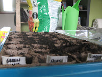 Seed trays labelled