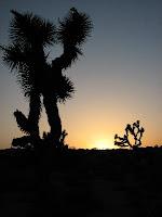 High Desert in Joshua Tree National Park