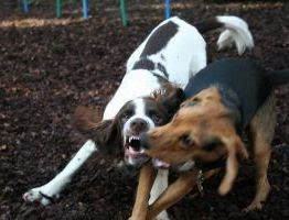 how to break up a dog fight safely