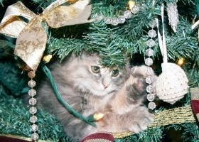 how to keep cats out of the christmas tree