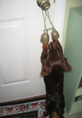 Responsible Pet Ownership Blog How To Train Your Dog To Ring A Bell