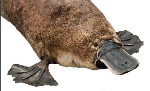 [the+duck-billed+platypus.jpg]