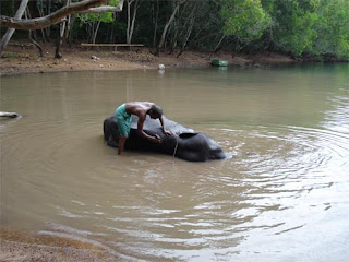elephant bathing with his mahout (elephant keeper)
