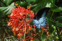 butterfly safari at Thenmala, Kerala