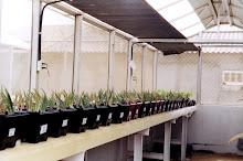 Ensayo de nutrición mineral en Aloe vera
