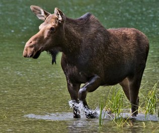 moose Lovely Girlie Bits   Irish Beauty Blog