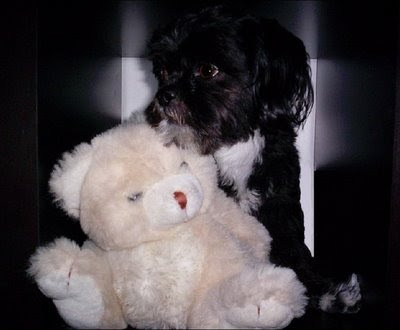 cute dog with a teddy bear