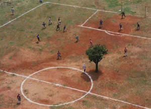 funny photo of tree in middle of football pitch