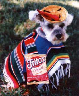 funny dogs mexican dressed up pics