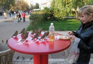 funny birds having a picnic