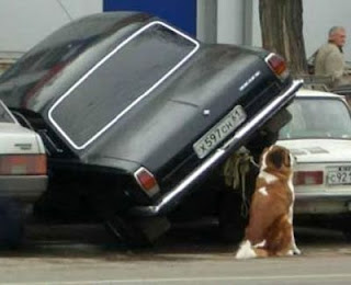 dog tied to badly parked car