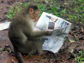 funny monkey reading a newspaper  photo