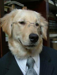 funny business suit retriever dog