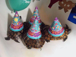 funny turtles birthday photo