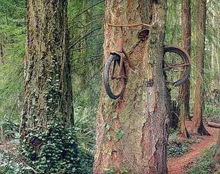 funny photo bike growing in tree