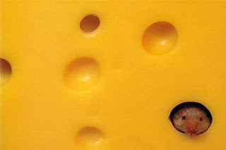 funny mouse photo head poking out from swiss cheese hole