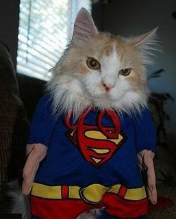 funny comic book animals photos cat dressed up as superman supercat