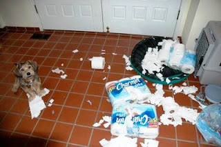 cute looking sorry dog destroyed bathroom and toilet paper