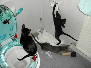 funny cats in a bathroom causing havoc and destruction