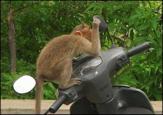 funny photo of monkey looking in mirror checking himself out on motorbike