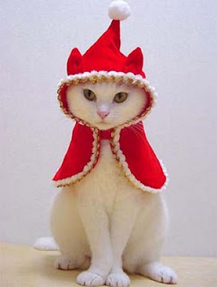 funny animal photos cat dressed up in red outfit for christmas maybe elf