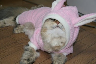 funny cat photo dressed up as easter bunny strange outfit and not happy