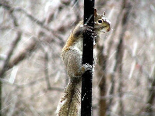 funny animal picture of frozen squirrel outside in snow storm