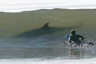 funny photo of surfer in water with shark shadow under the wave black wetsuit looks like seal